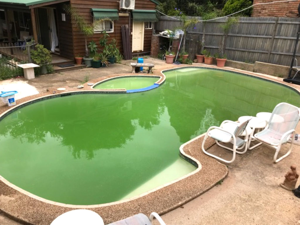 Green Pool before Pooled Energy transformed it to a clear pool